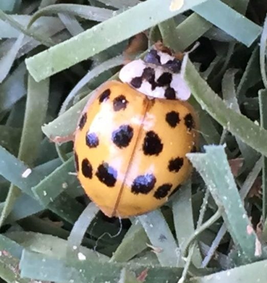 Ladybug in the News!