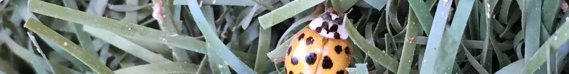 Ladybug's Favorite Hiking Spots in Phoenix for Kids