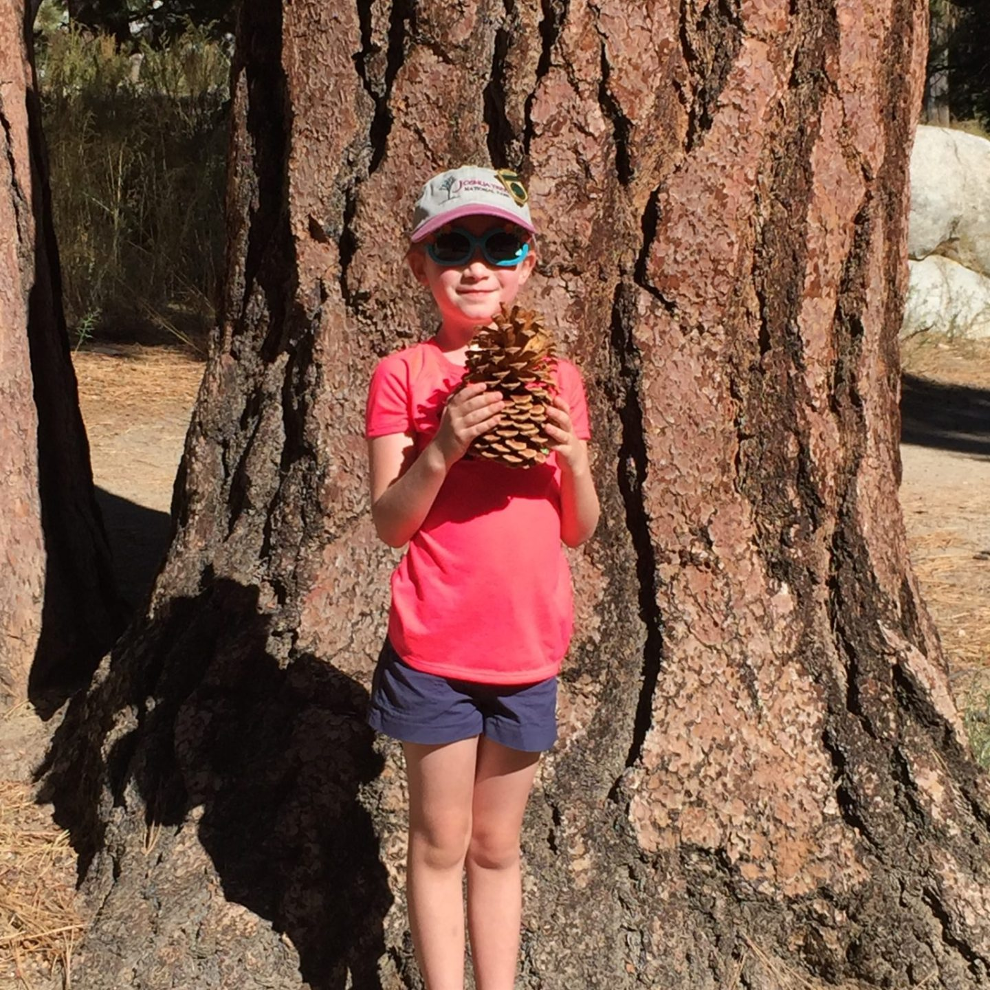 Tips for Camping with Kids in Arizona