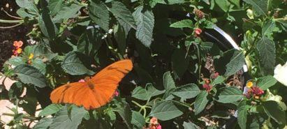 Butterflies and Wildflowers – Spring Blooms in the Sonoran Desert