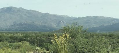 Summer Road Trip Arizona: Travel Tips for Heading North with Your Kids