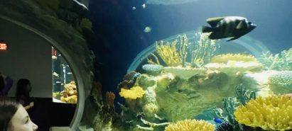 Water, Water Everywhere – Aquariums in the Sonoran Desert