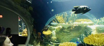 Water, Water Everywhere – Aquariums in the Sonoran Desert